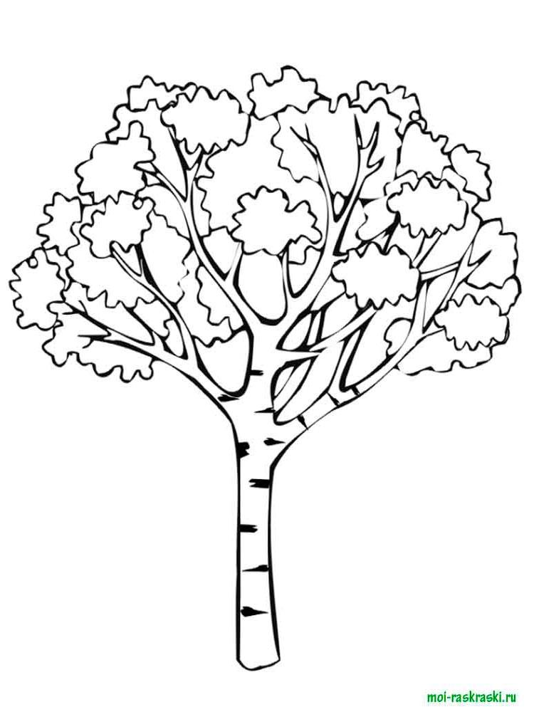 Хвойные деревья раскраски для детей   картинки 024