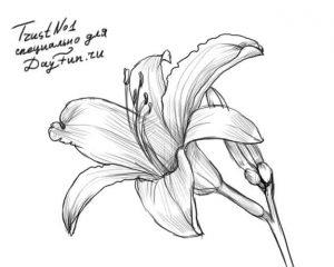 Цветы для рисования фото и картинки019