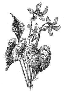 Цветы для срисовки карандашом   красивые и легкие (20)