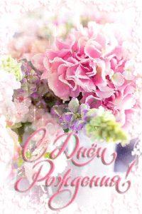 Цветы красивые для поздравления   подборка028