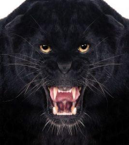 Черная пантера скачать фото бесплатно 021