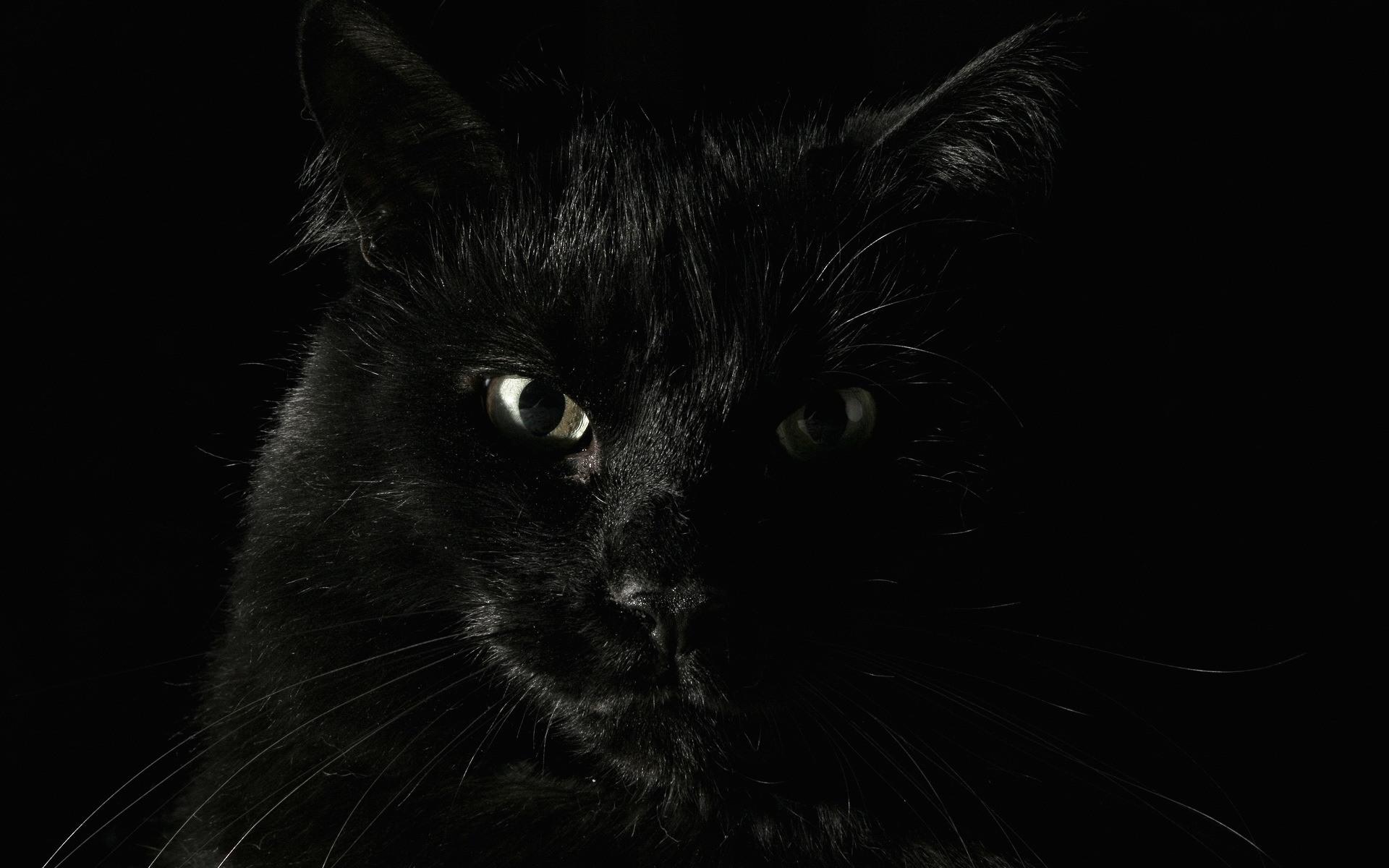 Картинки на рабочий стол черные котики