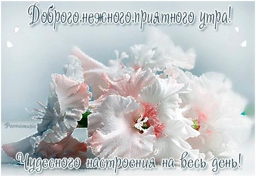 Чудесного доброго утра картинки и открытки003