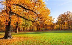 Широкоформатные обои на рабочий стол ранняя осень (20)
