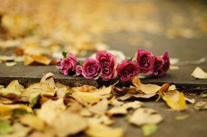 Широкоформатные обои осенние цветы для рабочего стола016