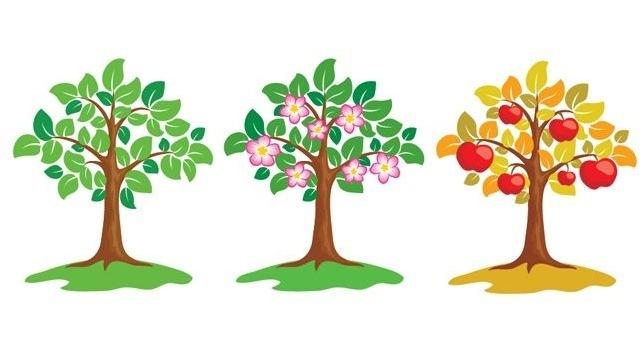 Рост яблони в картинках для детей