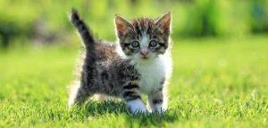 Cкачать бесплатно картинки с котятами на телефон   подборка (27)