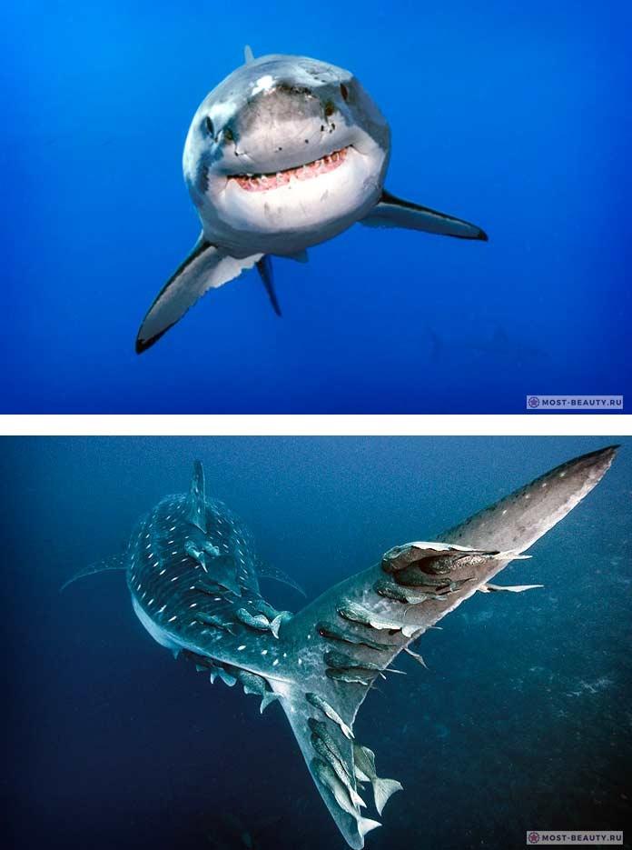Акулы красивые картинки002