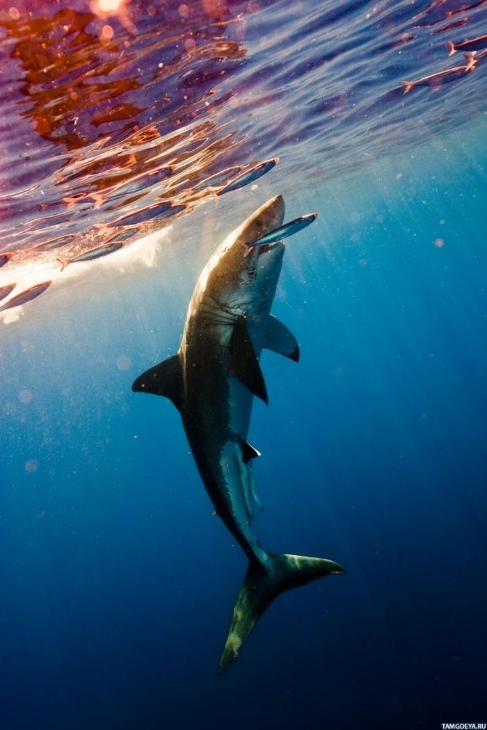 Акулы красивые картинки003