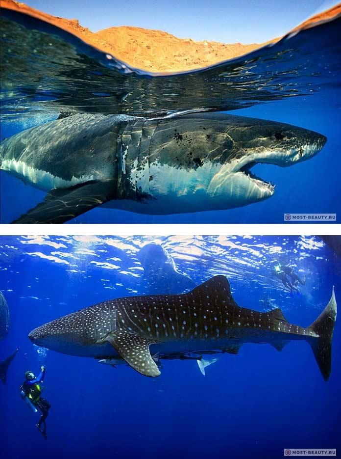 Акулы красивые картинки004