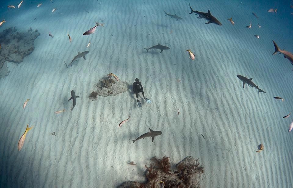 Акулы красивые картинки005