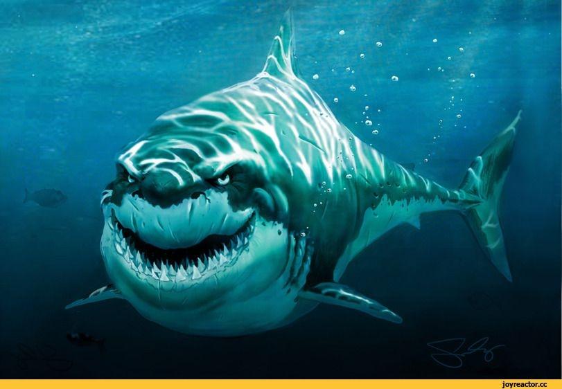 Акулы красивые картинки006