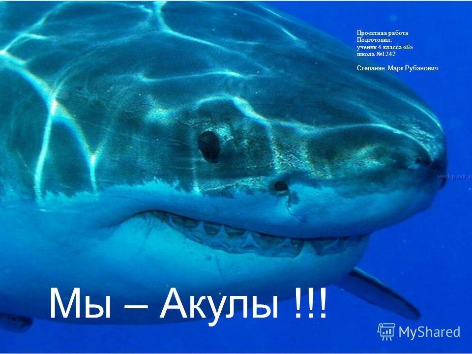 Акулы красивые картинки009