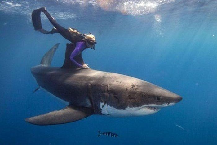 Акулы красивые картинки010