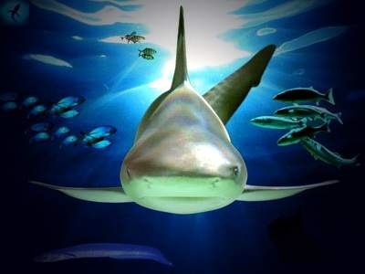 Акулы красивые картинки011