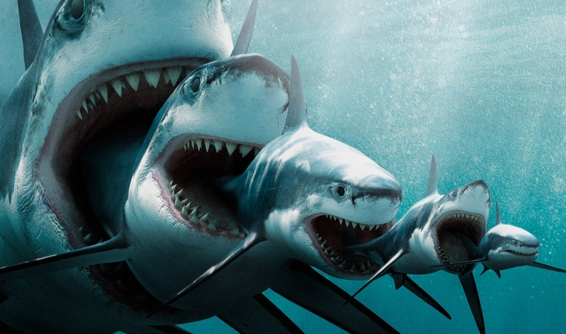 Акулы красивые картинки012