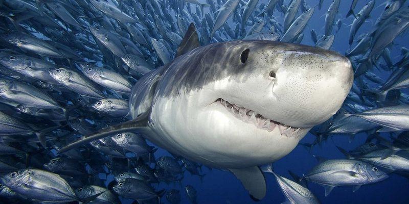Акулы красивые картинки013