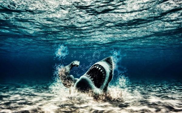 Акулы красивые картинки014
