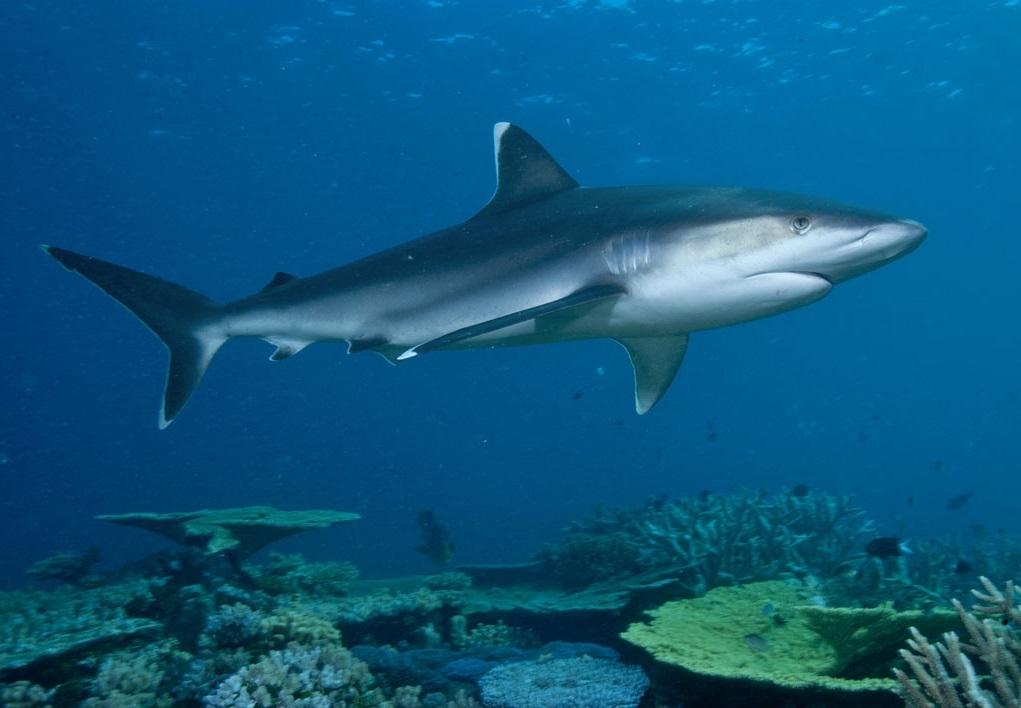 Акулы красивые картинки015