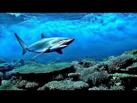 Акулы красивые картинки016
