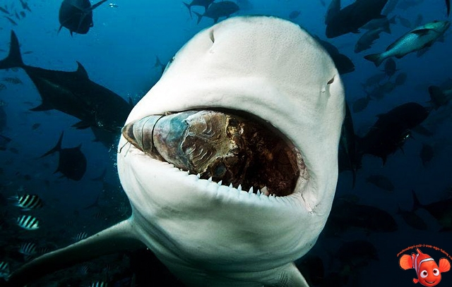 Акулы красивые картинки017
