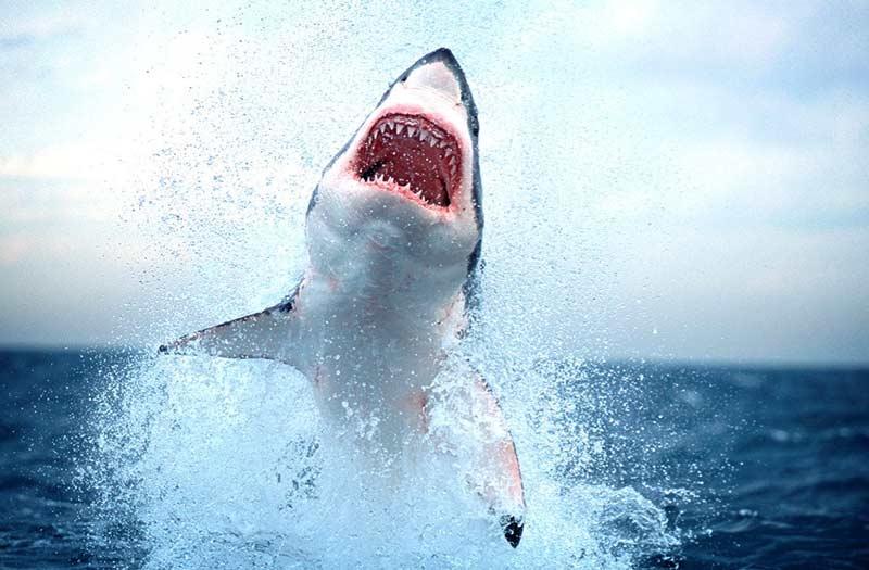 Акулы красивые картинки019