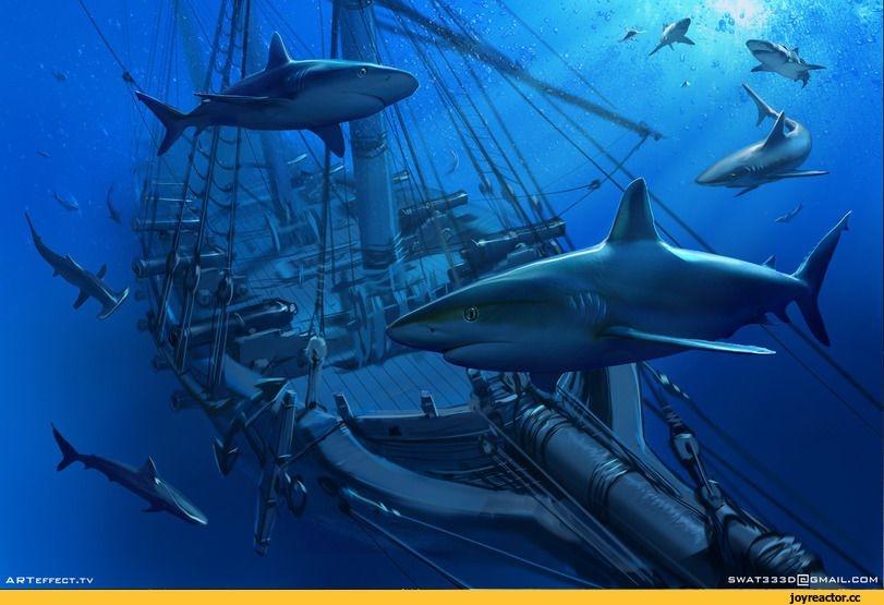 Акулы красивые картинки020