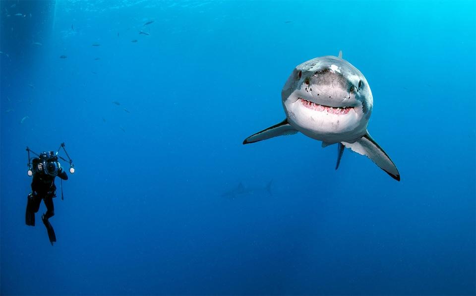 Акулы красивые картинки021