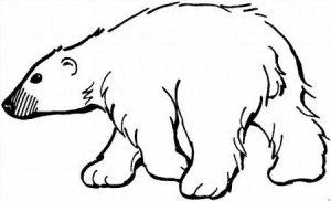 Белый медведь на льдине рисунок   картинки017