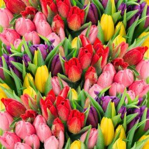 Весенние цветы красивые картинки001