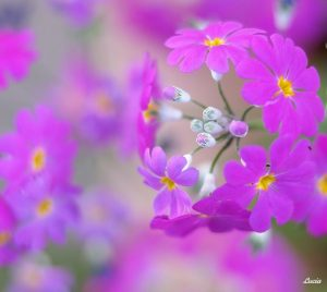 Весенние цветы красивые картинки019