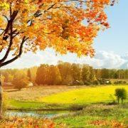 Времена года картинки осень   красивая подборка004