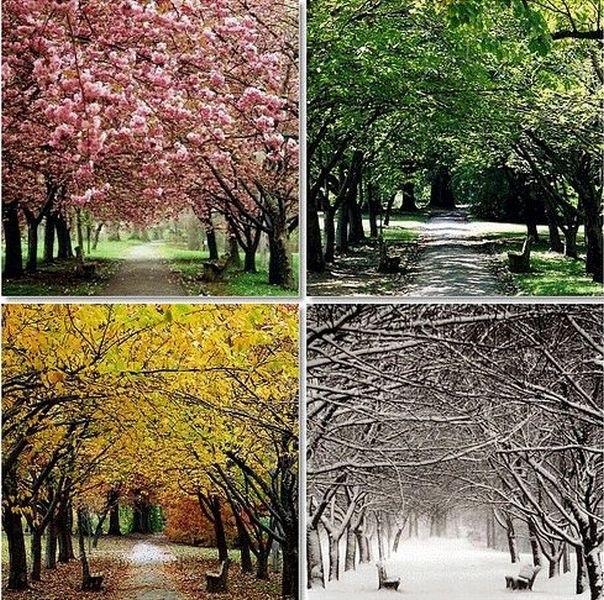 Времена года картинки осень   красивая подборка010