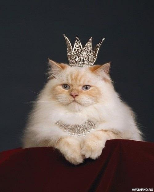 Девушка в короне на аву   красивая009