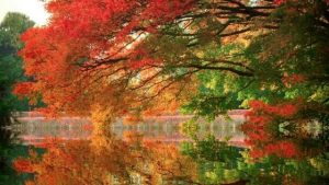 Дерево пейзаж   подборка картинок022