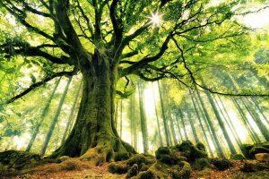 Деревья красивые картинки018