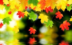 Заставка на рабочий стол осенние листья017