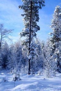 Зима фото скачать   подборка023