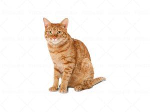 Картинка для детей котенок на прозрачном фоне   подборка016