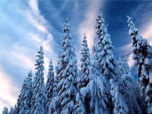 Картинка для детей лес зимний   фото018