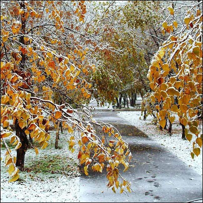Петухом прикольные, гифка поздняя осень