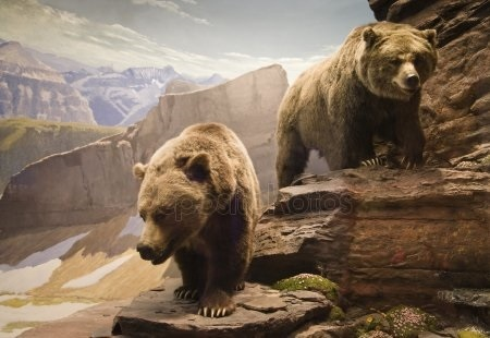 Картинки для декупажа медведи   классные001