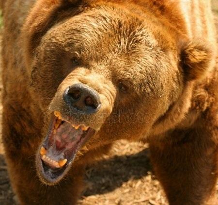 Картинки для декупажа медведи   классные003