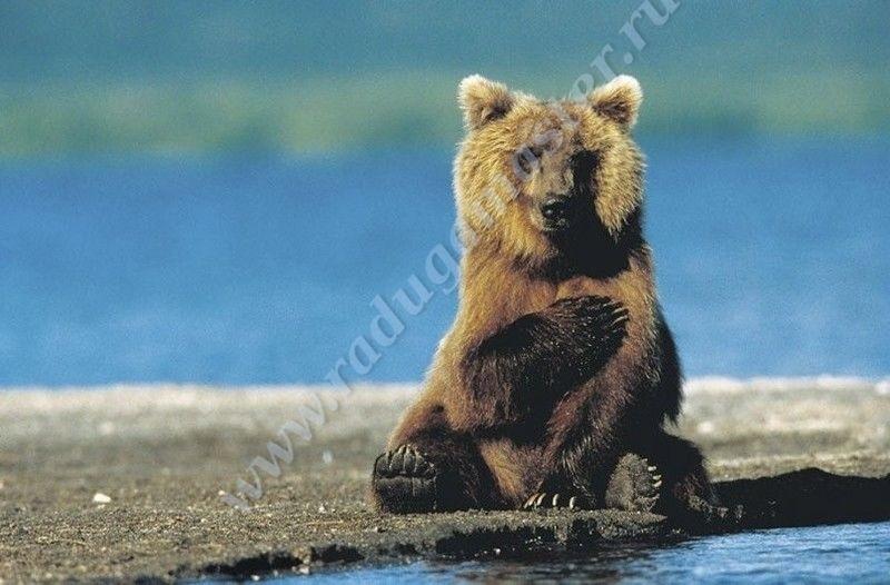 Картинки для декупажа медведи   классные008