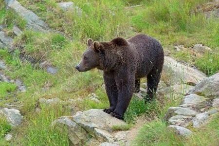 Картинки для декупажа медведи   классные010