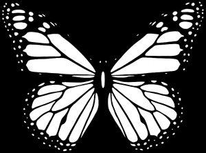 Картинки для срисовки бабочка   красивая подборка021