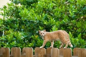 Картинки кот на заборе   фото001