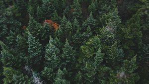 Картинки леса на рабочий стол015