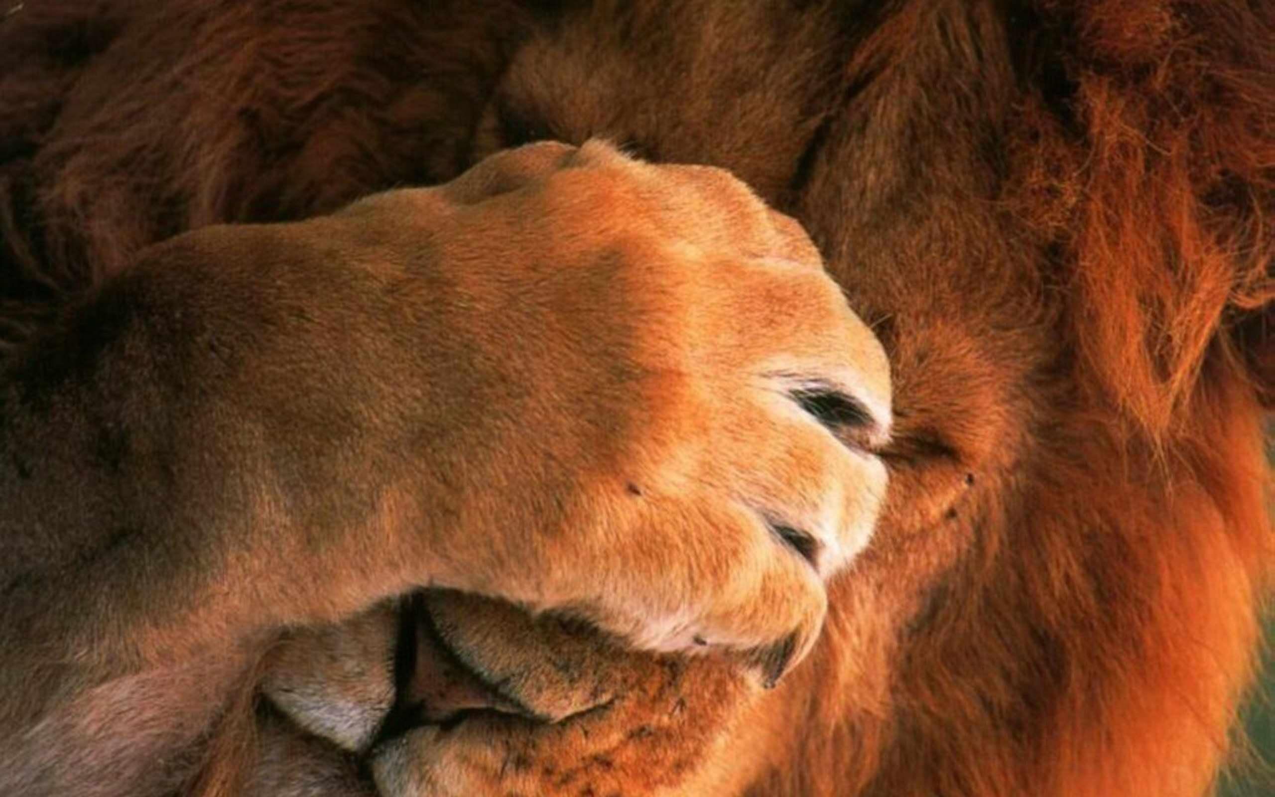 Добрым утром, прикольные картинки на тему лев