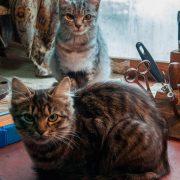 Картинки люблю тебя котики   милые008